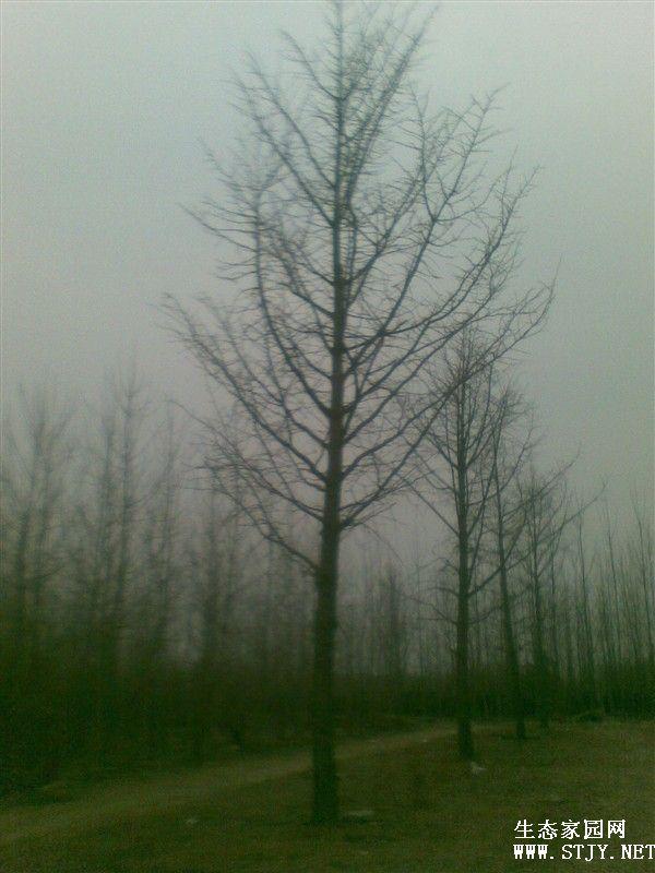 邳州银杏湖风景区位置