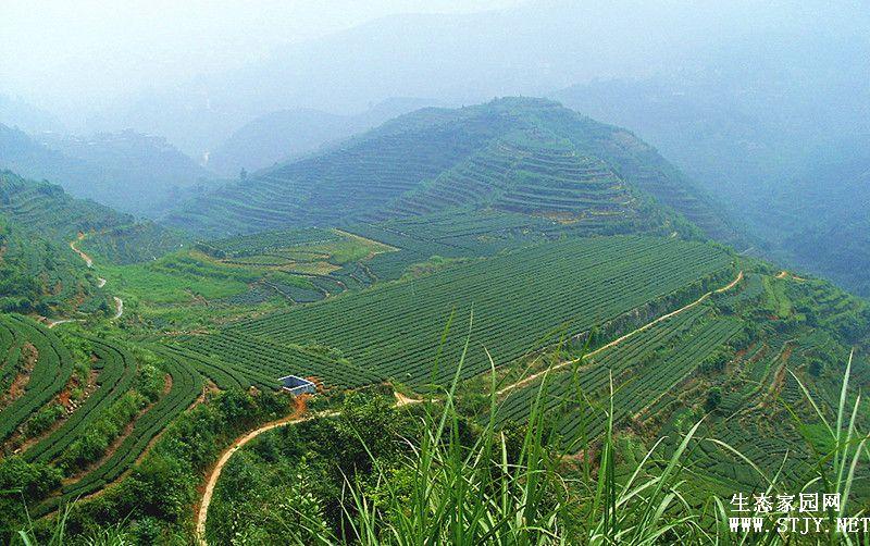 黑龙江农田土壤分类